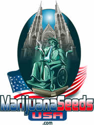 Marijuana Seeds USA